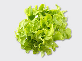 Food Organic